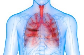 Lunge & Atemwege