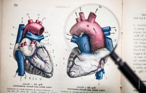 Ist das Herz wirklich eine Pumpe?
